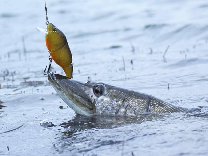 روش ماهیگیری اسپینینگ