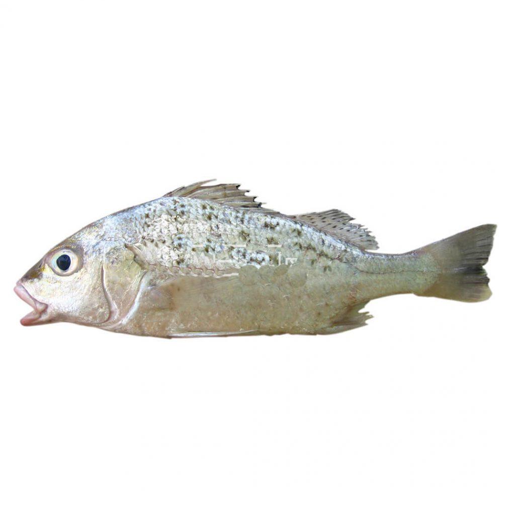 روش طبخ ودستور پخت ماهی