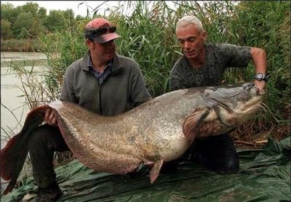 روش صید و طعمه ماهی گیری اسبله