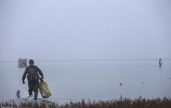 شکار مرغابی و اردک در شمال مازندران و گیلان :