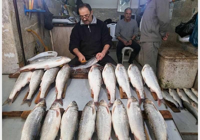 طعمه ماهیگیری برای صید ماهی سفید اشپل ماهی